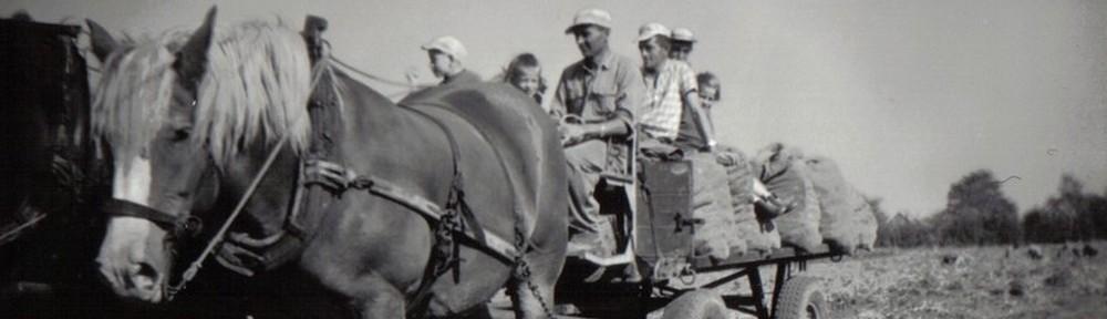 paardenwagen_uitgelicht
